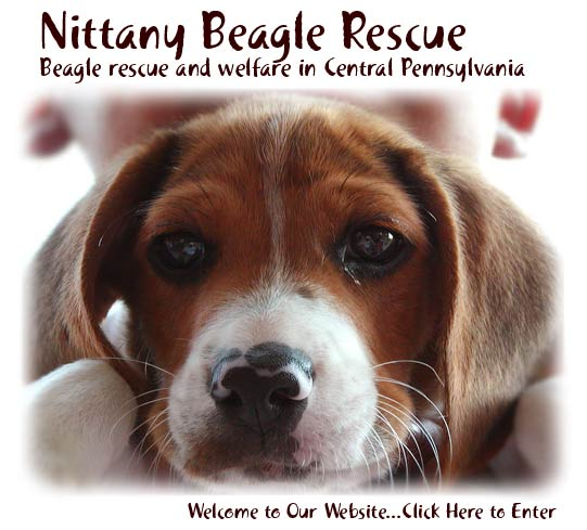 Nittany Beagle Rescue - Click to Enter